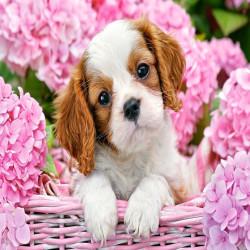 Кученце в розови цветя